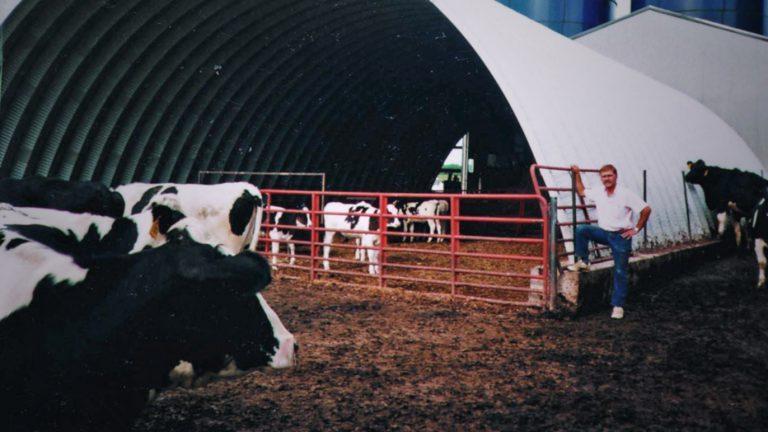Рыжий усач вокруг коров взбирается на бескаркасный арочный коровник
